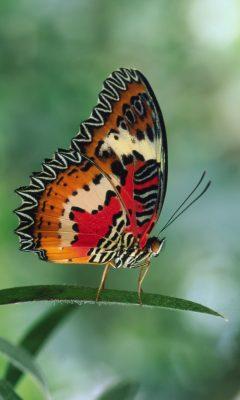 Das Aktionsprogramm Insektenschutz der Bundesregierung
