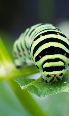 Insekten schützen leicht gemacht! Anleitung für Kommunen und Wildnisliebhaber