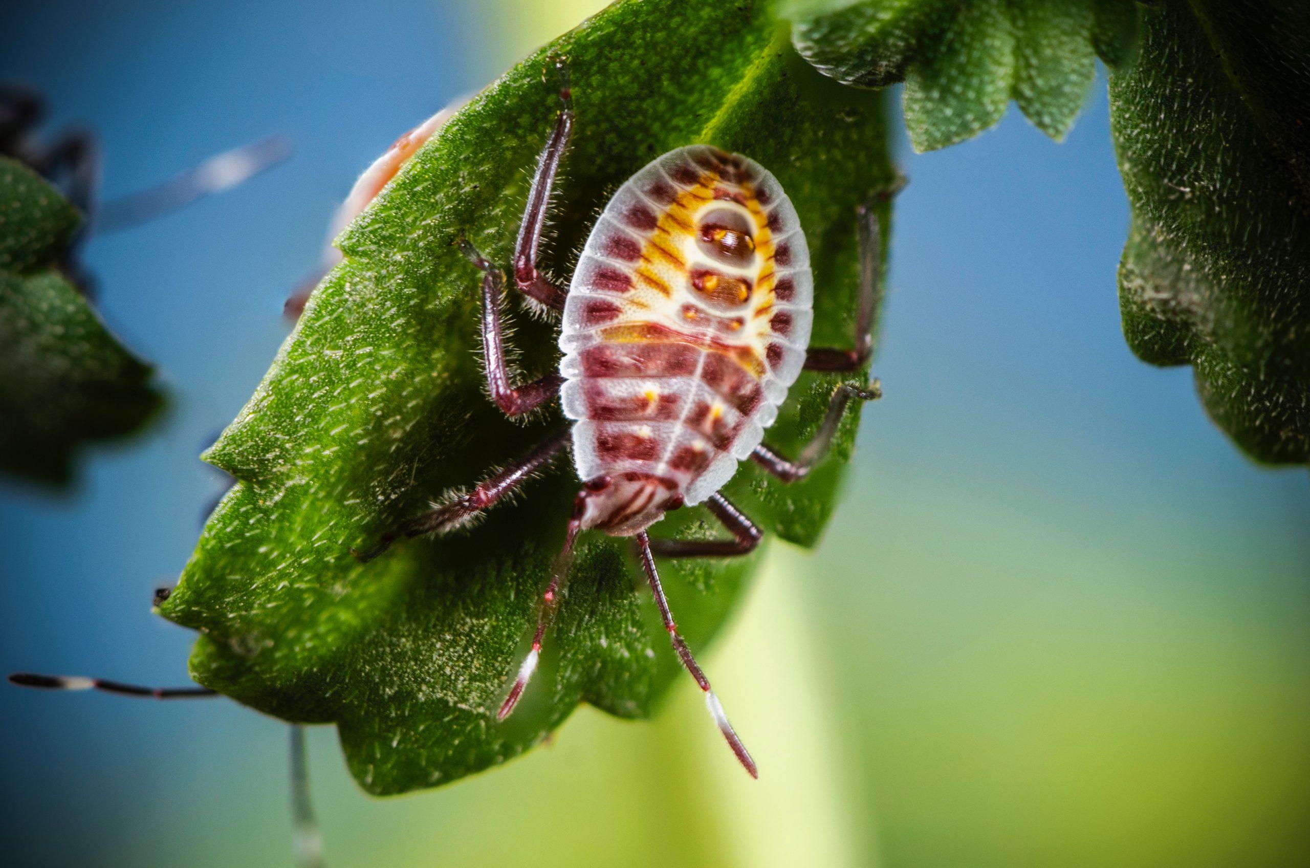 Kommen Sie mit auf eine entomologische Weltreise